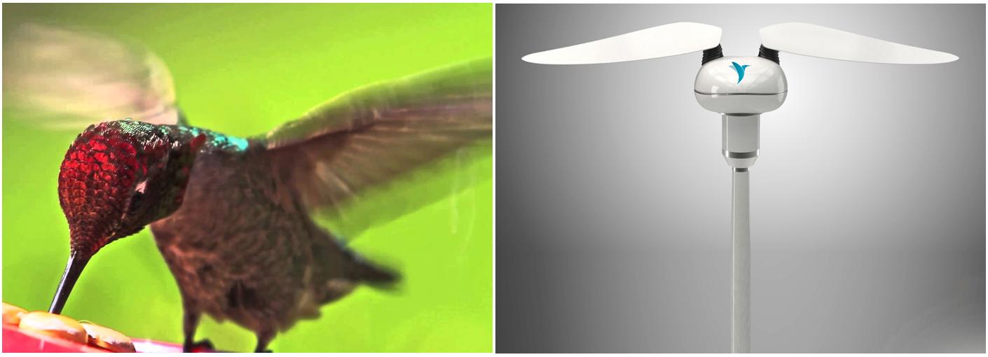 Il futuro nelle ali del colibrì