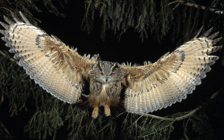 Il gufo e la sua ala silenziosa